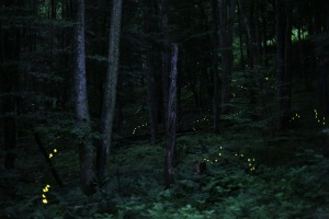 strings of fireflies