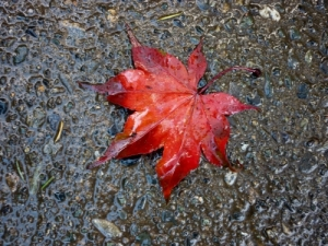 a leaf on the path