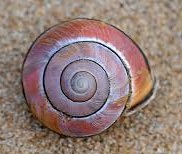 a snail shell